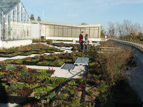 STO green roof